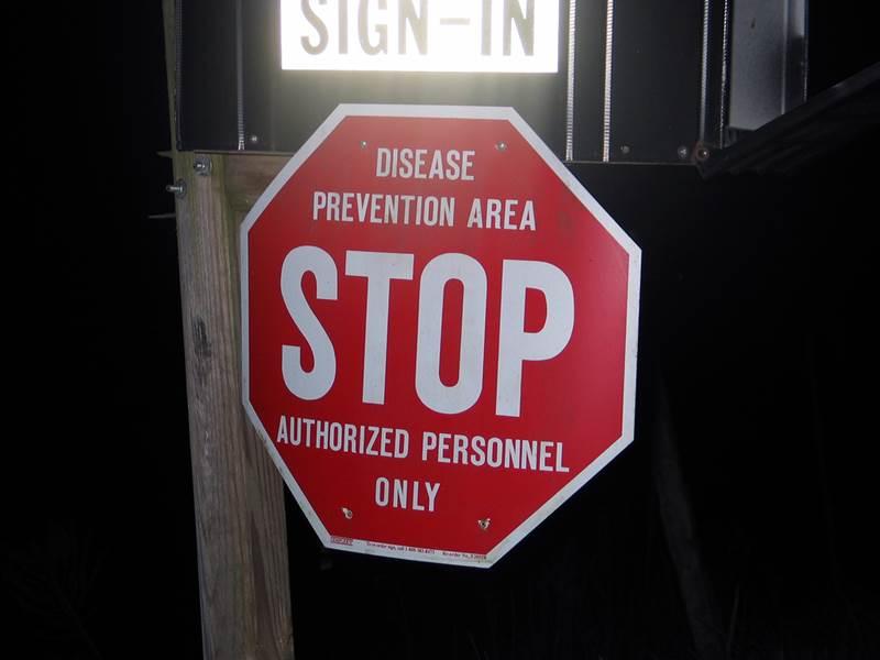 Минздрав Таиланда призвал не бояться эпидемии птичьего гриппа
