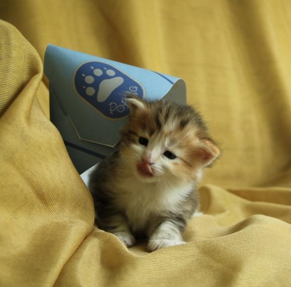 Котенок-психолог.