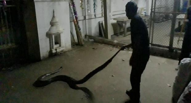 Питон задушил поймавшего его мужчину в Сукхотае