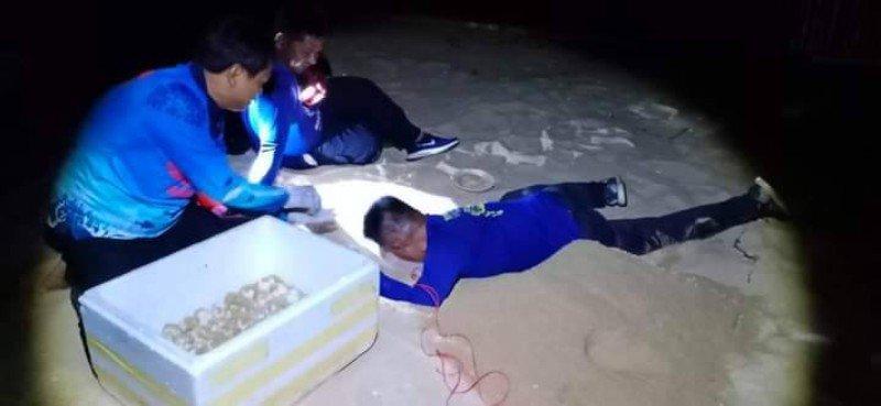 Морская черепаха отложила яйца на пляже Банг-Кван. Фото: DMCR